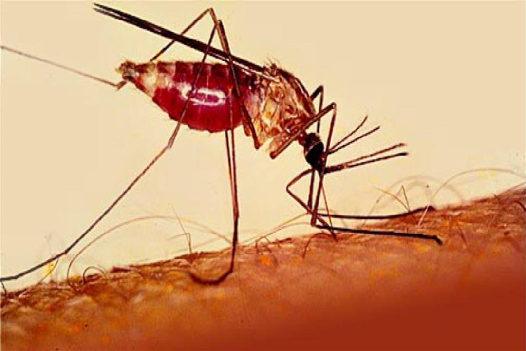 """صورة """"أكسفورد"""" تعلن فاعلية لقاحها ضد الملاريا بحلول 2024"""