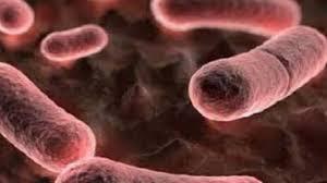 Photo of رئيس الطب الوقائى: الطاعون يمكن علاجه عن طريق المضادات الحيوية